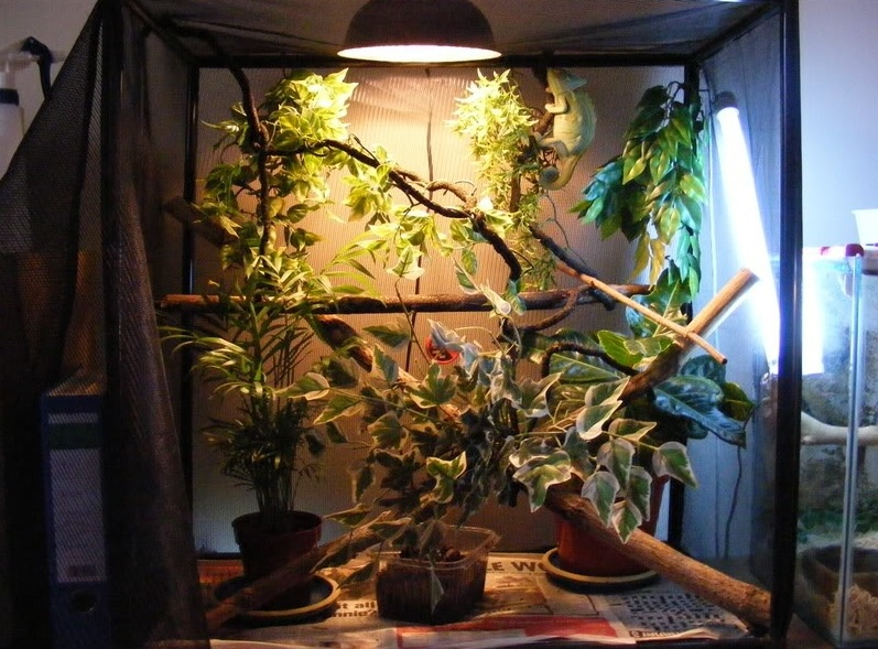 Lighting Setup For A Pet Chameleon